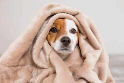 ทำไมสุนัขจึงเป็นสัตว์เลี้ยงที่เข้าใจเราที่สุด