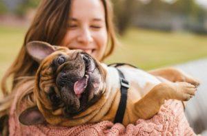 ฝึกสุนัขอย่างไรให้ฟังตามคำสั่ง