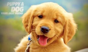 Read more about the article เรียนรู้พฤติกรรมสุนัข สัตว์เลี้ยงแสนรัก